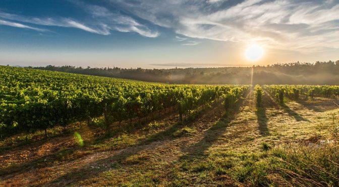 Il settore vitivinicolo in Bulgaria: un'opportunità d'investimento in un settore in forte sviluppo